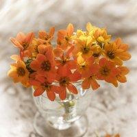 С пожеланием оранжевого настроения! :: Bosanat