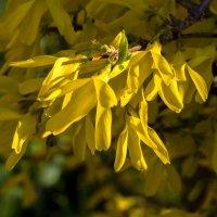 весенние цветы IMG_2346 :: Олег Петрушин