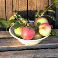 Эх. яблочко, да на тарелочке! :: Надежда
