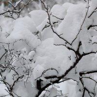 Пух Зимы :: Елена Зинченко Helen of Troy