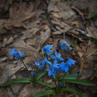 Сквозь опавшую листву.. :: Андрей Нибылица
