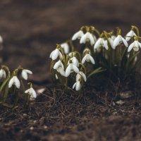 Стражи весны :: Алеся Пушнякова