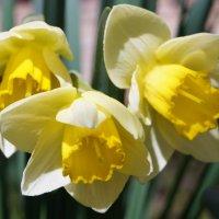 Вот наконец и Весна! :: Gal` ka