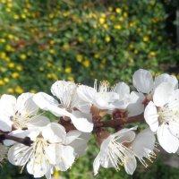 Счастье, как и весна, каждый раз меняет свой облик :: Алекс Аро Аро