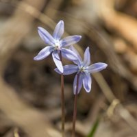 весна 3 :: Геннадий Свистов