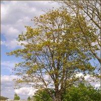 Природа в мае :: lady v.ekaterina
