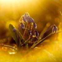 Весны дыхание :: ALEXANDR L