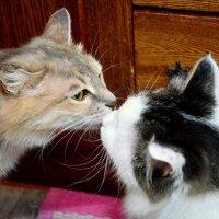 Весенний поцелуй :: Владимир Куликов