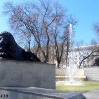 Фонтан со львами на площади Советов :: Нина Бутко