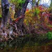 Сказочный лес :: Александр S