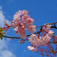 Цветущий апрель... :: Galina Dzubina