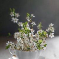 весна :: Женечка Зяленая