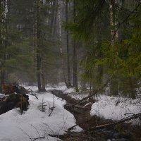 Утро в весеннем лесу :: Алексей (GraAl)