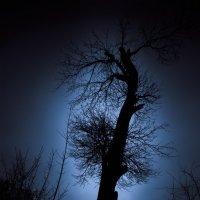 Лунное дерево :: Sergiy Korkulenko