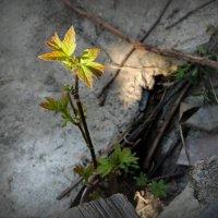 Весна :: Evgenia Glazkova