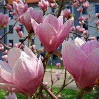 Цветущий апрель...... :: Galina Dzubina