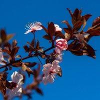 весенние цветы IMG_2327 :: Олег Петрушин