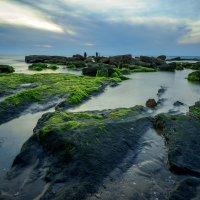 Зеленые камни :: Alex Molodetsky