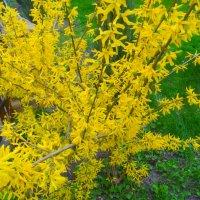 Золотые россыпи... :: Тамара (st.tamara)