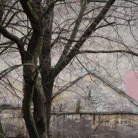 дом для того самого Розового Слона :: sv.kaschuk