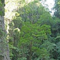 Мангра - дерево растущее в соленой воде :: ИРЭН@ Комарова