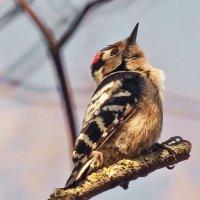 Маленькая, но очень гордая птичка... :: Павел Руденко