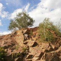 И на камнях растут деревья :: Вячеслав & Алёна Макаренины