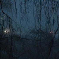 вечер,туман :: Олег