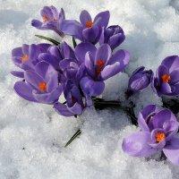 Весенние цветы. :: Hаталья Беклова