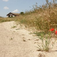 Летние маки и ферма. :: Олег Мар