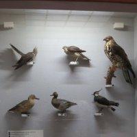 Чучела птиц :: Вера Щукина