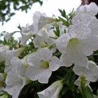 Цветы :: Lybov