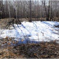 Апрель доедает снег.. :: Александр Шимохин
