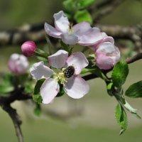 Весна :: Любовь