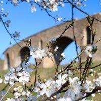 Весны цветенье... :: Светлана Попова