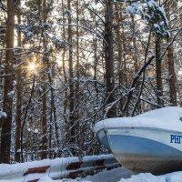 Особенности рыбалки в зимнем лесу. :: Serge Lazareff
