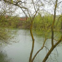 В апреле у пруда... :: Тамара (st.tamara)