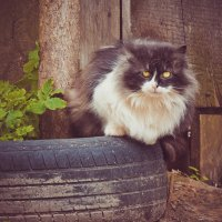 Бездомный кот :: Максим Журба