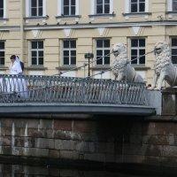 Санкт-Петербург, Львиный мост :: Димончик