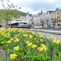 Карловарская весна :: Алла Захарова