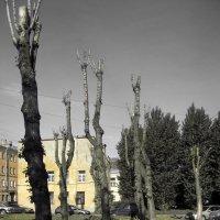 Городские тотемы :: AleksSPb