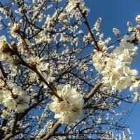 Цвет весны#2 :: Юлия Закопайло
