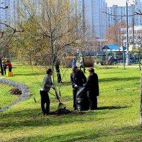 Субботник - это когда те, кто не мусорит, убирают за теми, кто мусорит. Бесплатно. :: Татьяна Помогалова