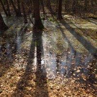 Соединяются ли осень и весна? :: Андрей Лукьянов