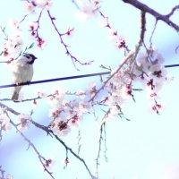 Весна! :: Юрий Гайворонский