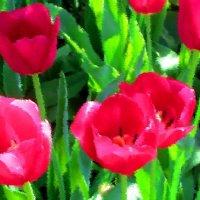 Тюльпаны :: Владимир