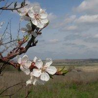 Весна в Ростовской области :: Владимир Стаценко