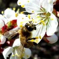 Пчёлка :: Татьяна Королёва