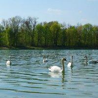 Апрель...На  городском озере... :: Galina Dzubina