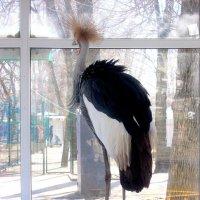 За стеклом... в ожидании весны :: Нина Бутко